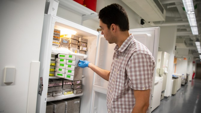Ciro Cordeiro, a postdoc in Scott Emr's lab in Weill Hall, organizes frozen cell samples.
