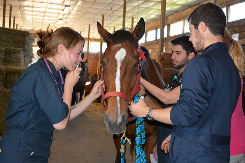 first year equine lab