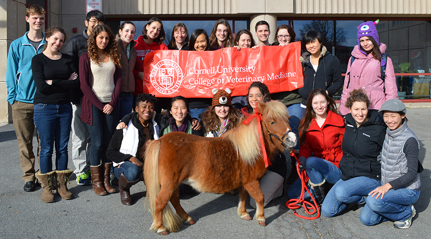 "CVM students posing with school mascot ""Minnie"" the miniature horse"