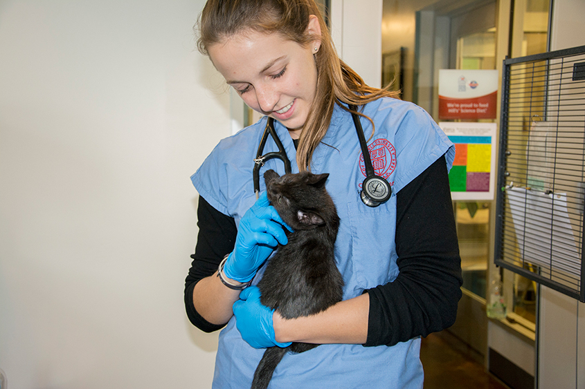 Student with kitten at shelter