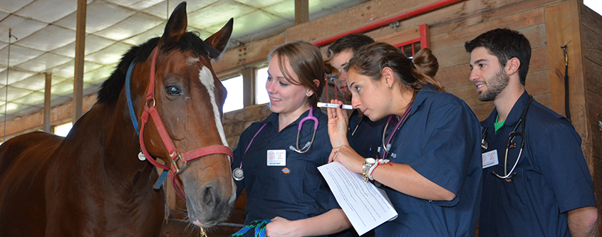 First year students in equine lab