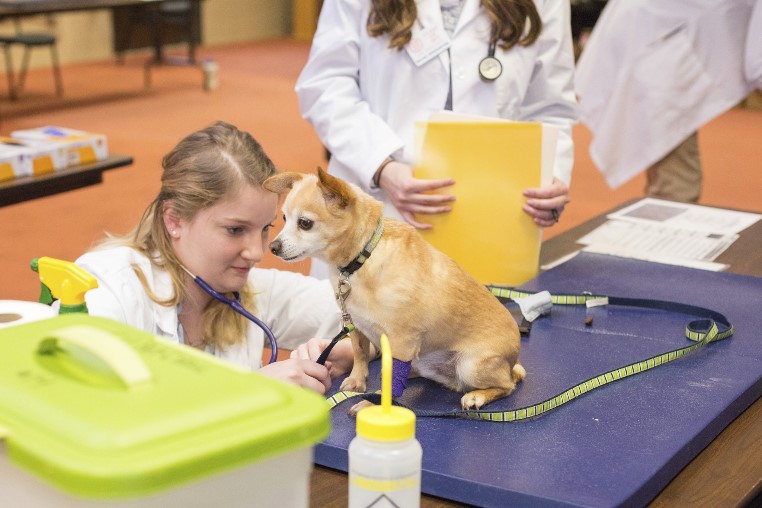 Vet student with a chihuahua