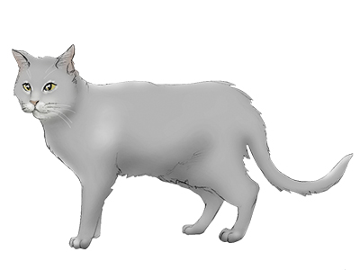 Feline Behavior Problems: Aggression | Cornell University