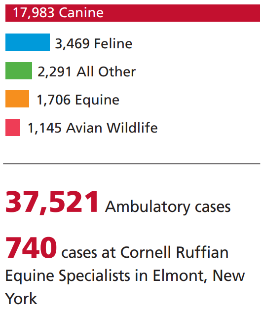 Bar chart of CUHA caseload with two call-out numbers: 37,521 ambulatory cases and 740 Cornell Ruffian Equine Hospital cases