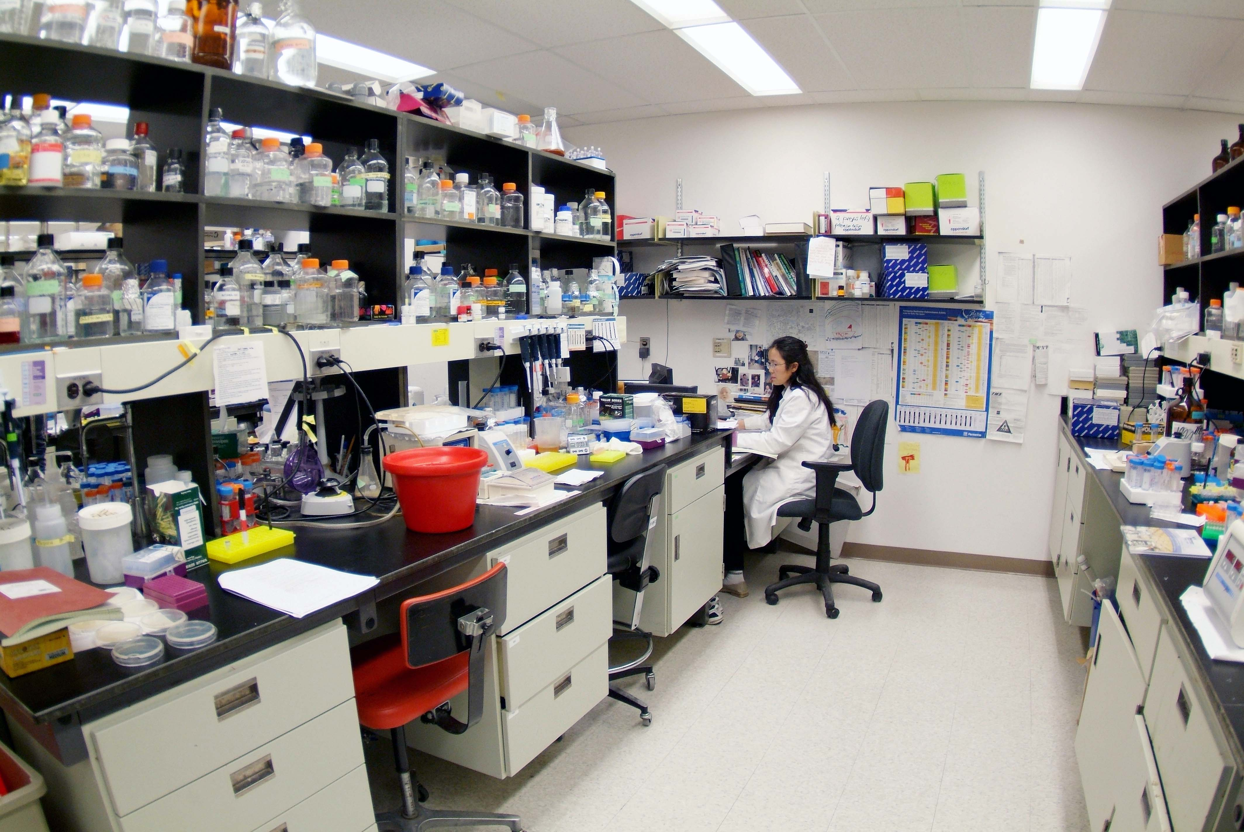 https://www.vet.cornell.edu/sites/default/files/CVM_VTBMS_BioSciences-lab_VRT_150_27370.jpg