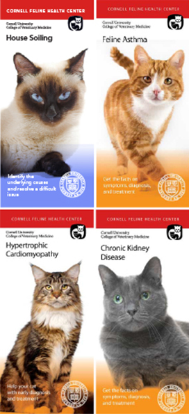 four brochure covers each with an image of a cat