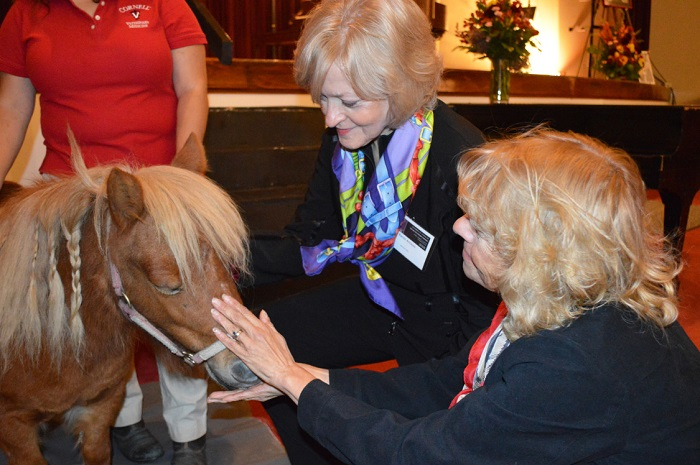 Concert attendees petting Mini the horse
