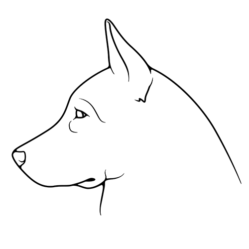 Drawing of a dog's profile