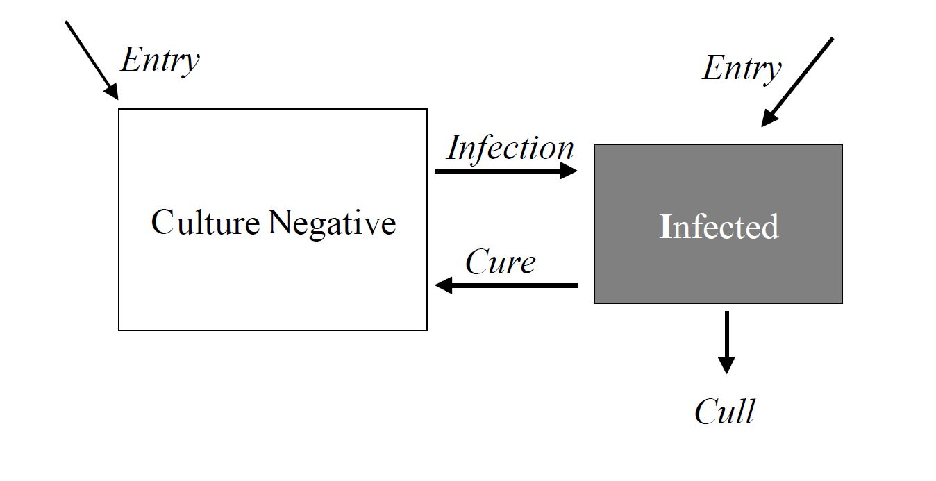 Dynamics of infection in a dairy herd
