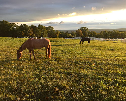 Horses grazing in a field.