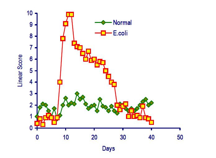 Somatic cell count pattern in the successful response of the mammary immune system to an incoming bacterial infection.