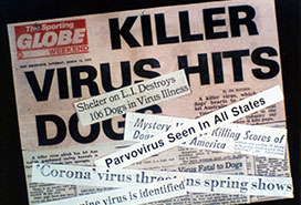 Parvovirus emerged in the 1970's