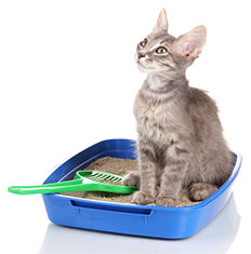 If you're having problems, your cat may have medical problems, an aversion to the litter box, the litter itself, or the location, or she may have a preference for another location.