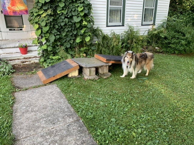 A collie stands next to a homemade ramp outside his home during summertime