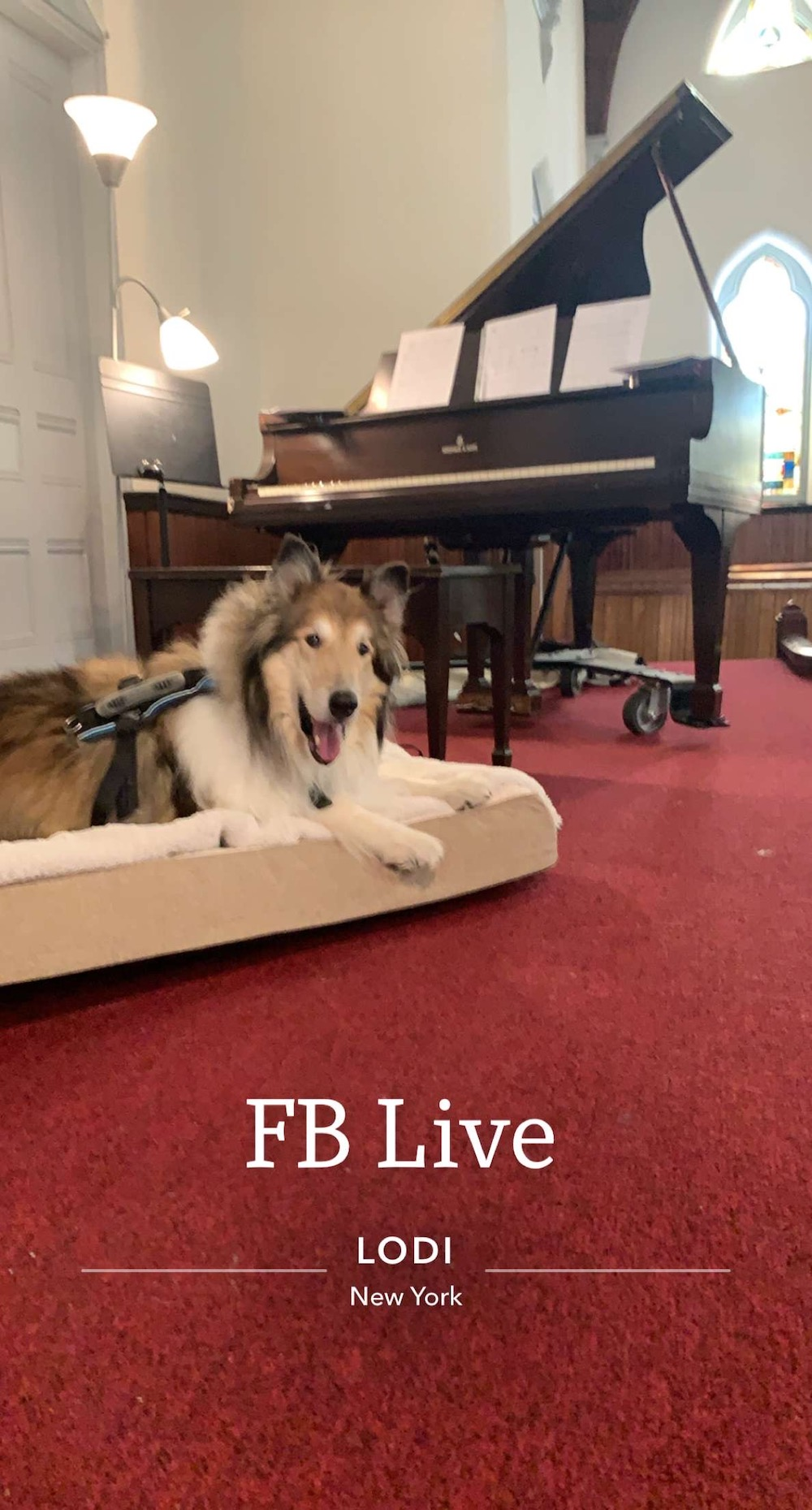 An ad for a Facebook Live event with a collie seated on a dog bed in a church with a piano behind him