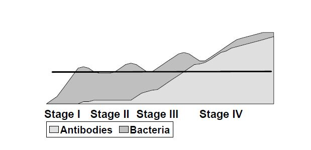 Figure 2. Hypothetical concentrations of mycobacteria and antibodies vary through the stages of infection. The horizontal line represents test detection level and demonstrates that bacteria are more detectable in late Stage III and throughout Stage IV.