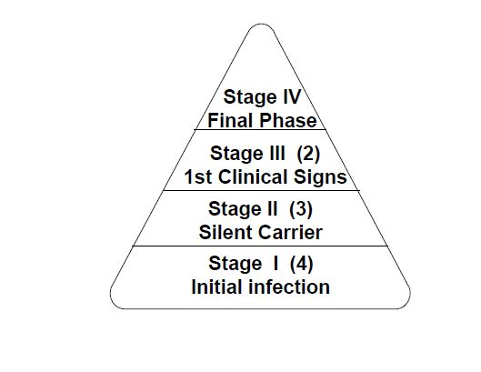 Figure 1. For each animal detected in Stage IV, two animals are hypothesized in Stage III, three are in Stage II and four are in Stage I.