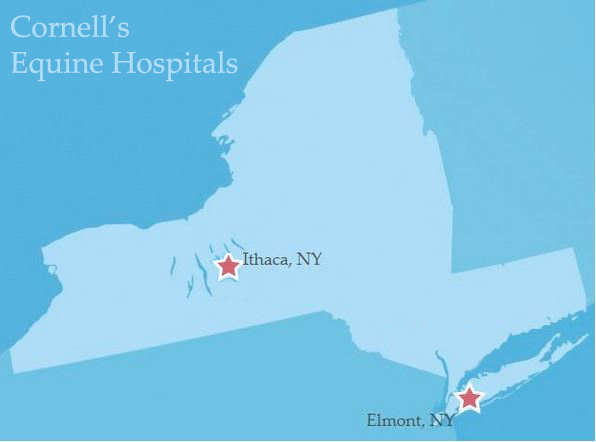 New York silhouette with stars over where hospitals located in Ithaca and Elmont