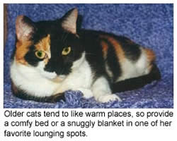 Calico cat curled up on a blanket