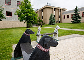 Canine Parvovirus Cornell University College Of Veterinary Medicine