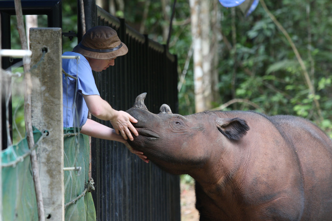Robin Radcliffe and a Javan rhino