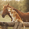 Happy horse and dog together in a field.