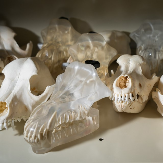 Skulls on a table made of plastic and plaster