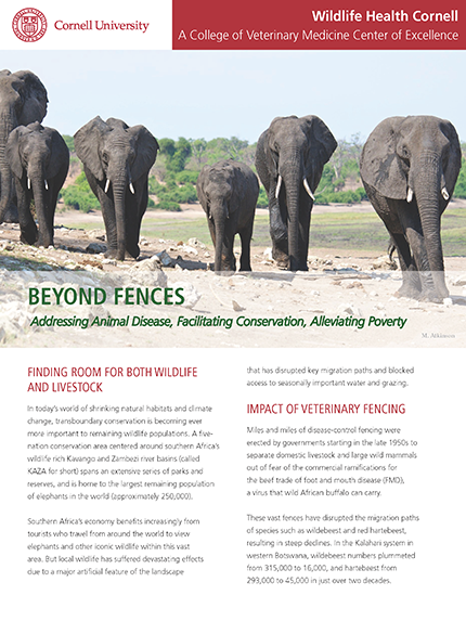 Beyond Fences article cover