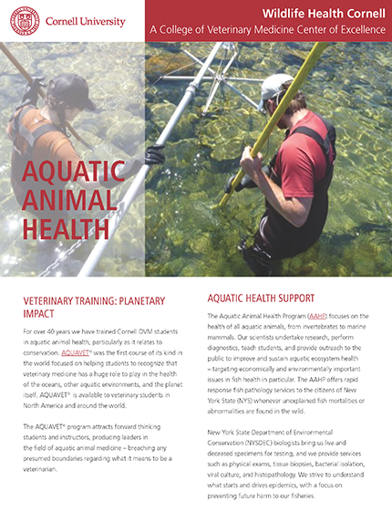 Aquatic Animal Health article cover