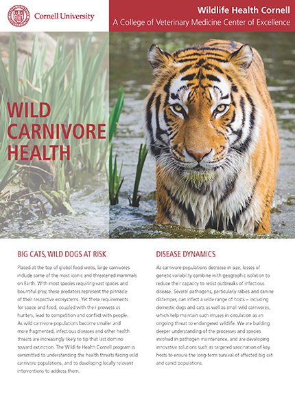 Wildlife Carnivore Health article cover