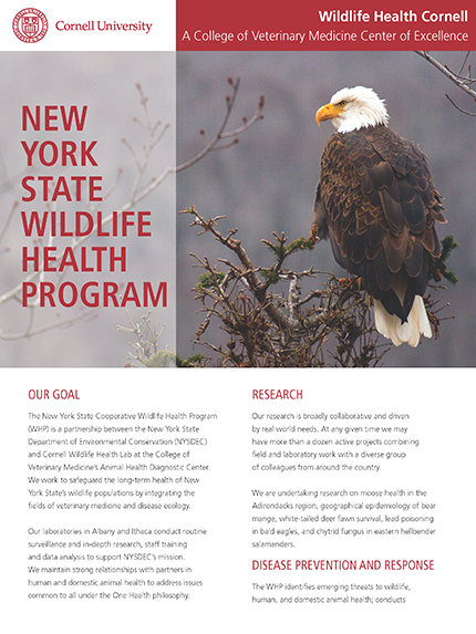 New York State wildlife health program article cover