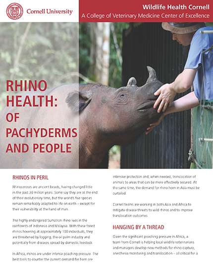 Rhino Health article cover