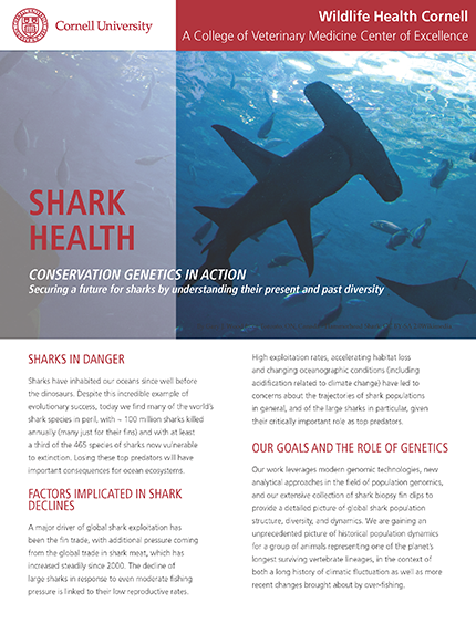 Shark Health article cover