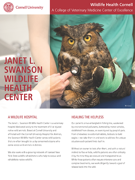 Janet L. Swanson Wildlife Health Center article cover