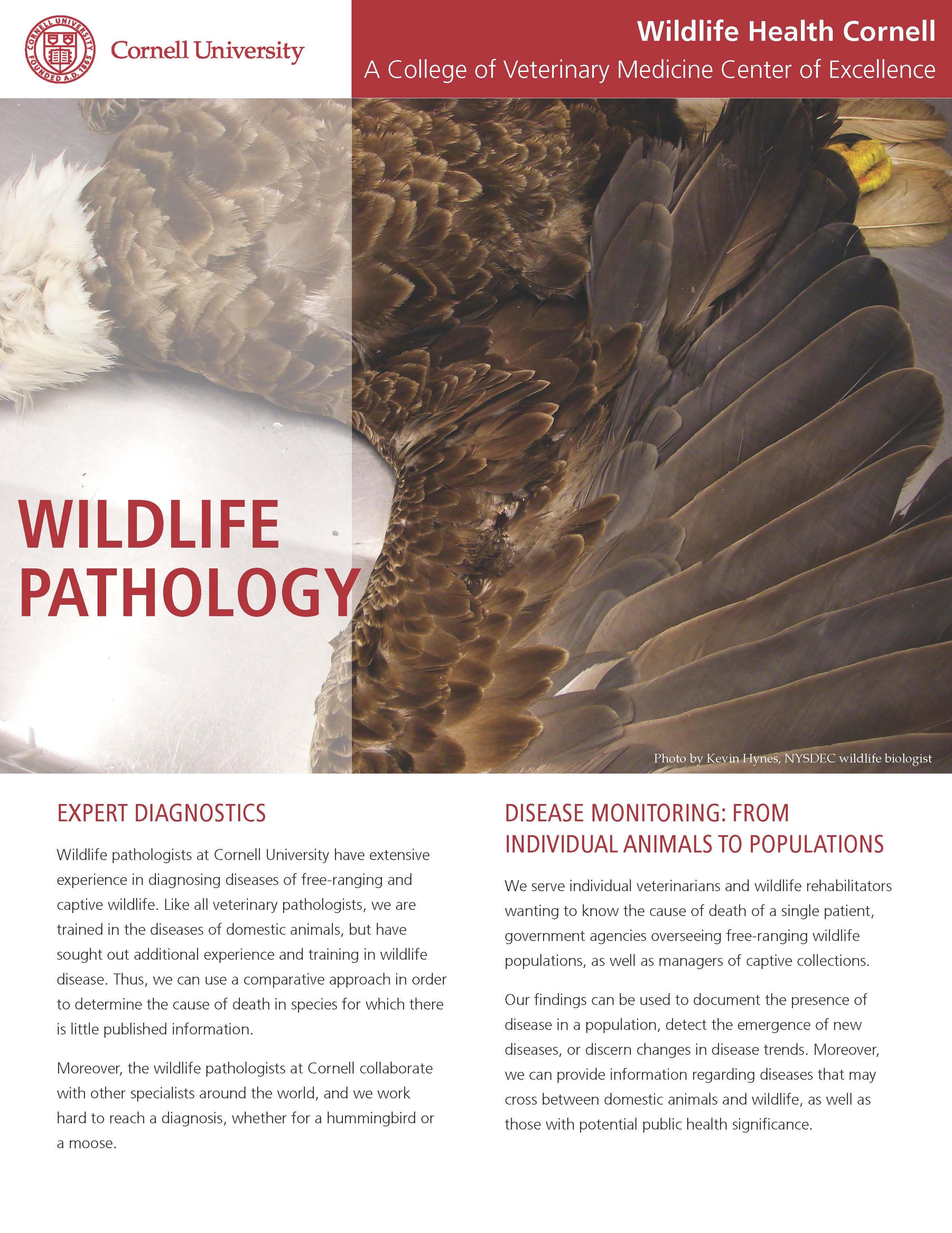Wildlife Pathology article cover