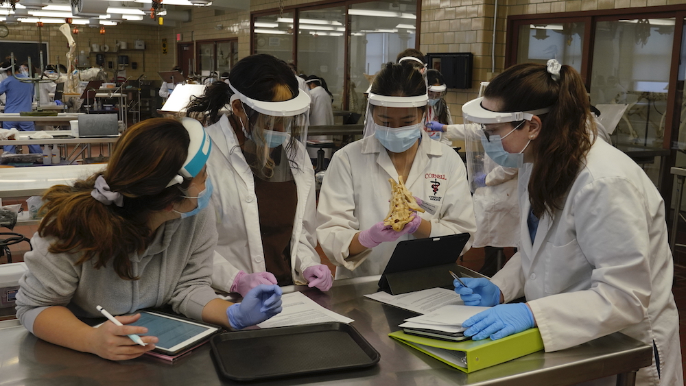 A group of veterinary students examine a specimen in a neuroanatomy lab, all wearing face masks and shields