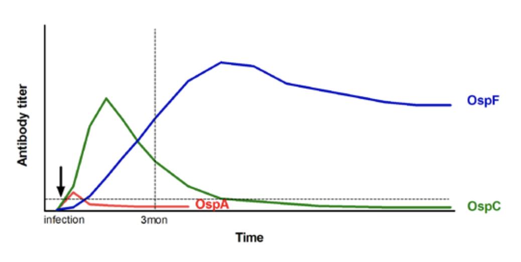 Lyme Disease Multiplex Testing for Horses | Cornell