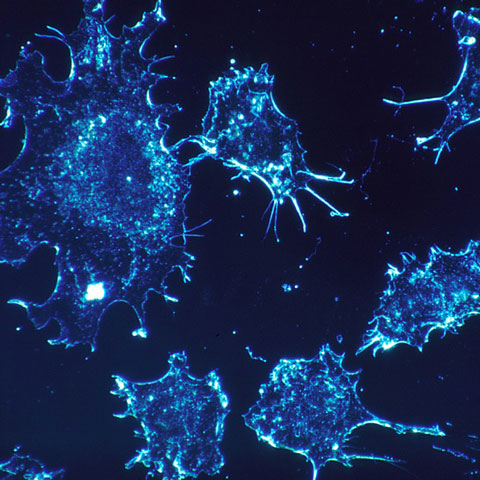 Neurons highlighted blue