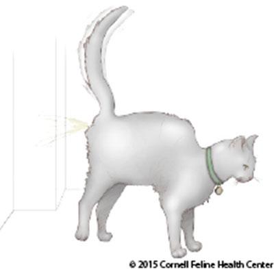 Feline Behavior Problems: House Soiling | Cornell University