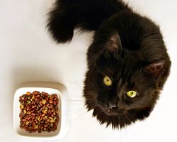 Cat with bowl of kibble