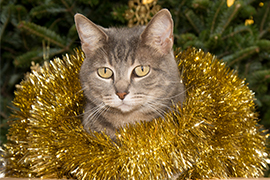 cat wrapped in tinsel