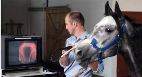 Doctor scanning a horses snout