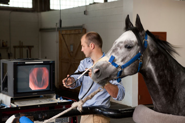 Veterinarian holds endoscope and views image on monitor