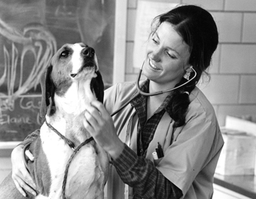 A doctor and a dog during an examination