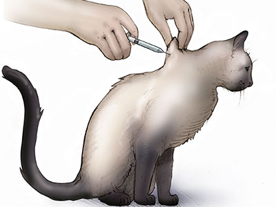 Insulin injections are the preferred method of managing diabetes in cats.