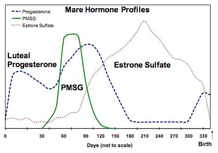 Equine Female Reproductive Testing | Cornell University