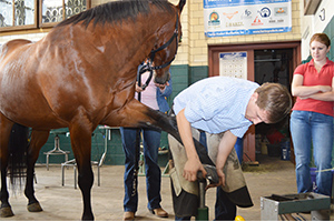 A farrier works on triming a horses hoof in the farrier shop.