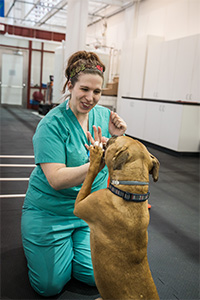 A dog gives a veterinary technician a high five.