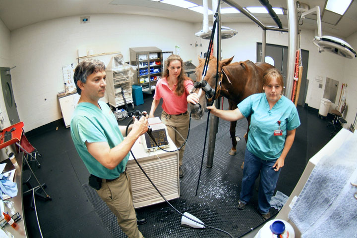 Horse receiving an endoscopic evaluation performed by equine performance specialists