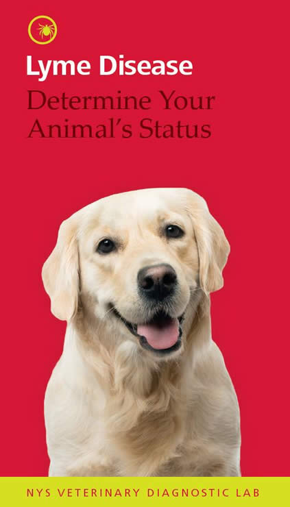 Yellow lab dog on red background, cover for Lyme Disease brochure